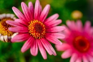 ニコンのおすすめマクロレンズAF-S DX Micro NIKKOR 40mm f/2.8Gレビューで花を撮る