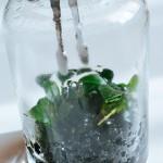テラニウム Terranium BOTANIST ボタニスト 水草 BOTTLEを購入